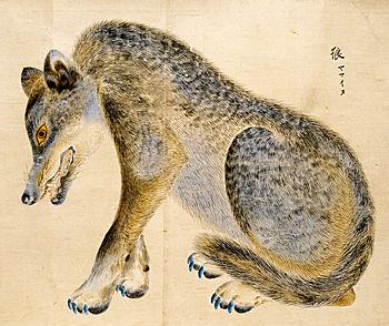 ニホンオオカミの画像 p1_12